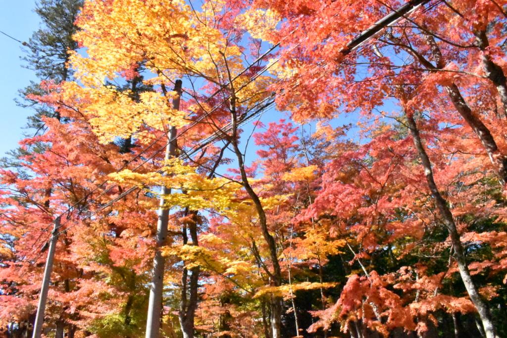 軽井沢の秋の道